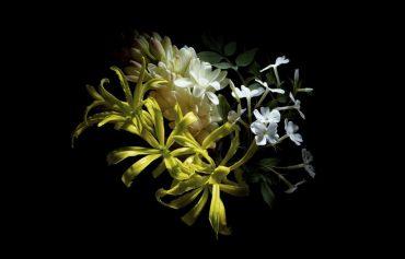 Alexander McQueen Parfum BLOOMATNIGHT